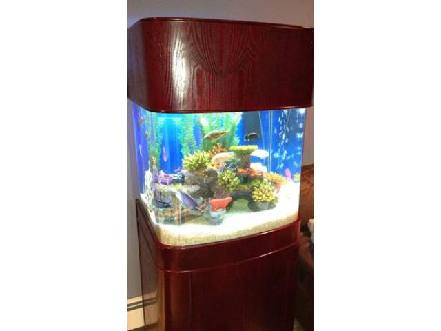 Fish Tank 55 Gallon Glass Round Front W Wood Cabinet